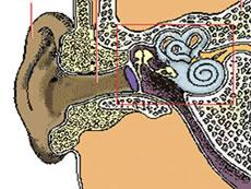 Esquema de la estructura del oído
